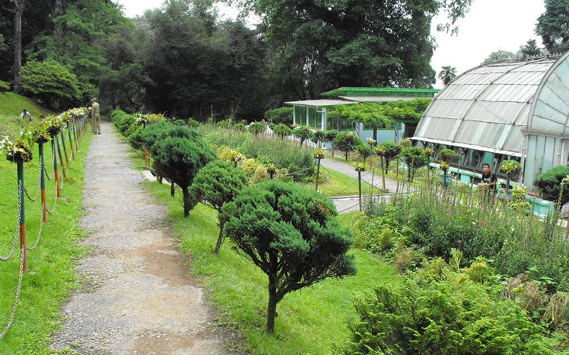 Lloyd Botanical Garden is one of the main attractions for the visitors in Darjeeling. It is a favourite spot of recreation with vistas across some of the loveliest slopes. It is situated at a distance of 2 kms from Elgin Hotel in Darjeeling