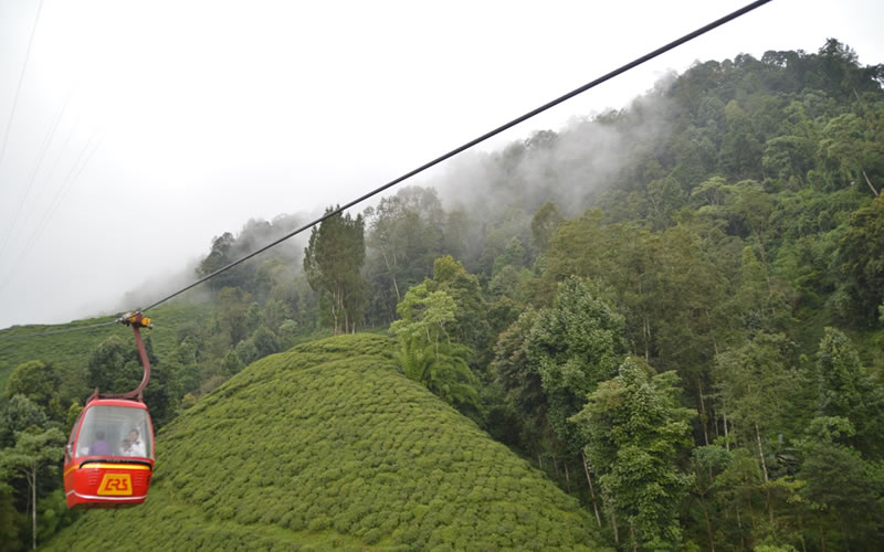 Darjeeling Ropeway or cable car station is located at Singamari, 3 km away from the Chowk Bazaar of Darjeeling. Established in 1968, the Darjeeling Ropeway is India's first cable car system, set up to cater to the tea gardens in the valleys which did not have easy access