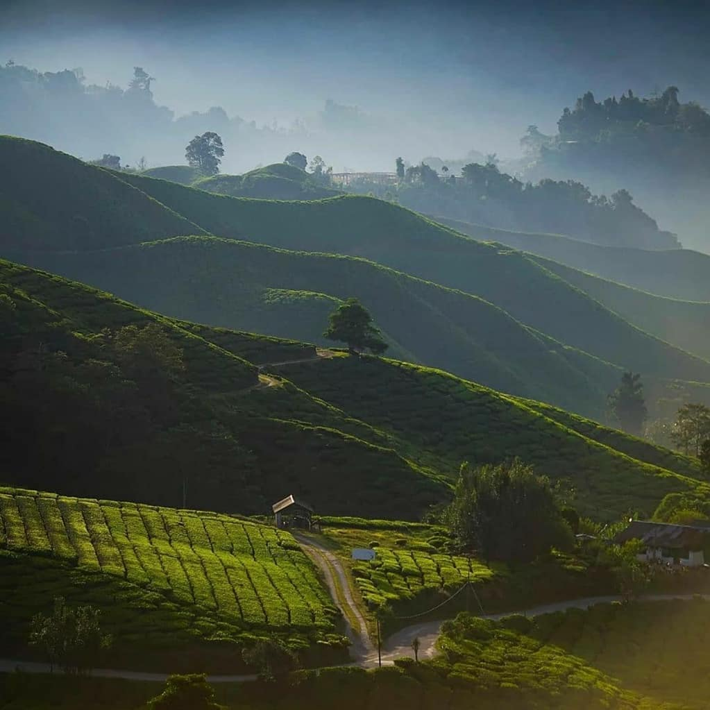 6 places to visit in Darjeeling, Tea Plantations near The Elgin Hotels & Resorts