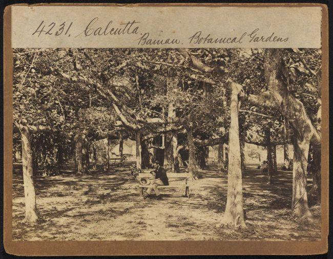 Kolkata-Botanic-Garden-01