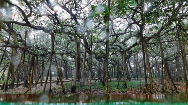Kolkata-Botanic-Garden-03